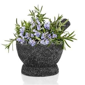 """The Amazing Herb Rosemary"""