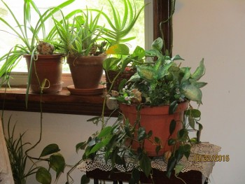 air purifier plants