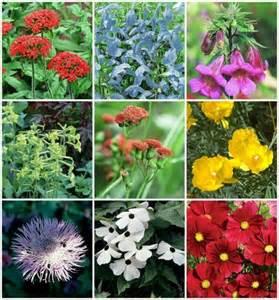 Mary's Heirloom Flowers