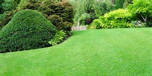 greening your lawn