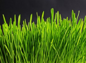 Maintenance tips to keep your lawn healthy