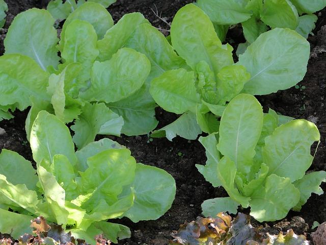 Grow pest free garden 1
