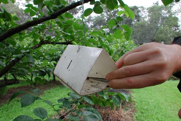 Grow pest free garden 6