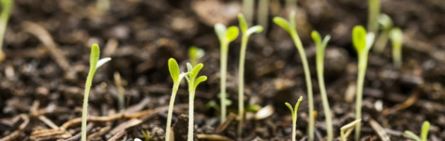 seedling-660x335