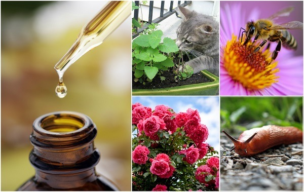 Ways-To-Use-Essential-Oils-In-The-Garden