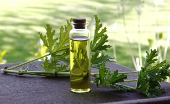 essential oil use jpg