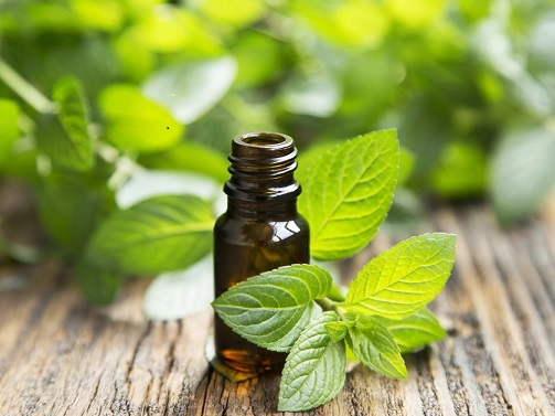 peppermint-oil-mint-leaves.jpg.838x0_q80