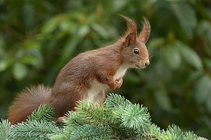 squirrel-1325389_1920