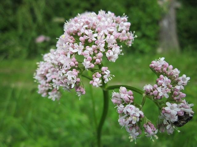 valerina-flowers