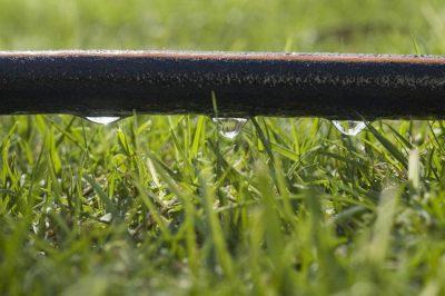 watering vegetables