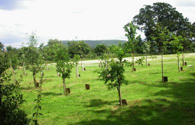 Hamdown_Woodland_Burial_Ground_-_geograph