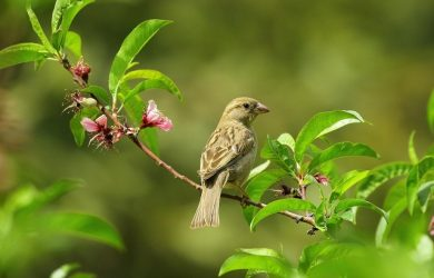bird in flowering tree
