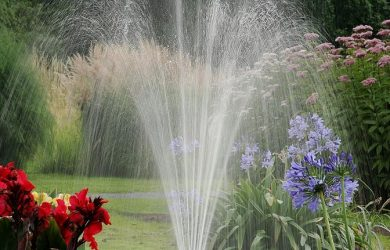 water and flowers