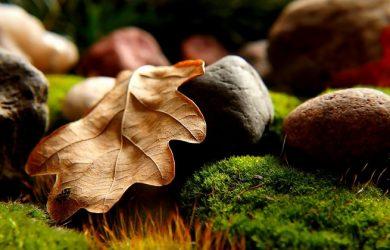 leaves, rocks grass