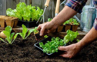 planting garden
