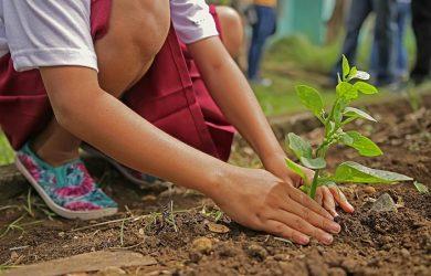 women planting in garden