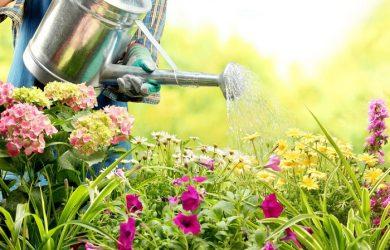 watering your garden 33 (1)