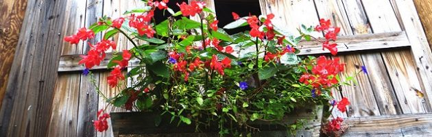 flower box on old shed
