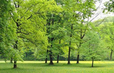 trees-park-outside-810x608