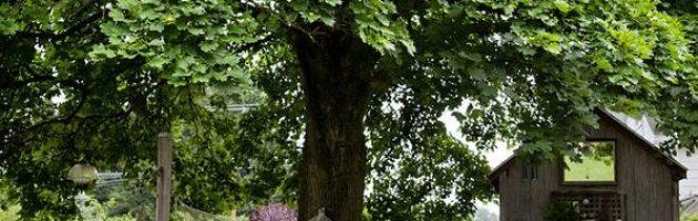trees in backyard for sun safe