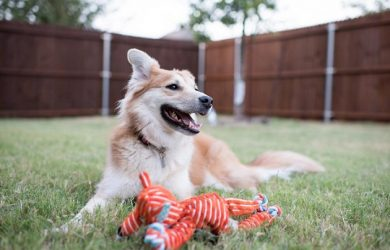 tips for pet friendly backyard