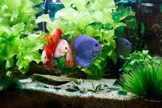Hydro Fish Tank