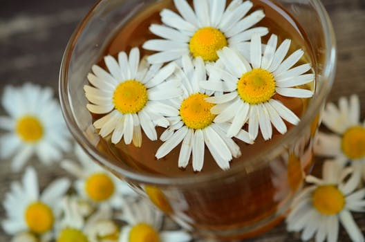 chamomile tea for anxiety