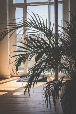 plants improve indoor air quality in your home